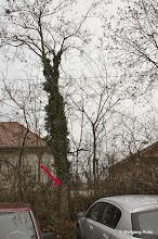 Photo: Gekennzeichneter Baum vor dem Zaun am Wasserwerk Berg