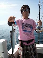 Photo: ヨシダさんもサワラ・・・? サゴシ?