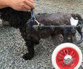 C:UsersuserDesktopTomomiHPギャラリー2カット済み中型犬M2輪614.jpg