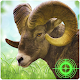 Download Animal Hunt: Wild Mission - Commando Forest Hunter For PC Windows and Mac