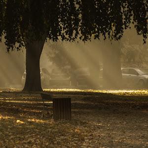 žarki-park-9007.jpg