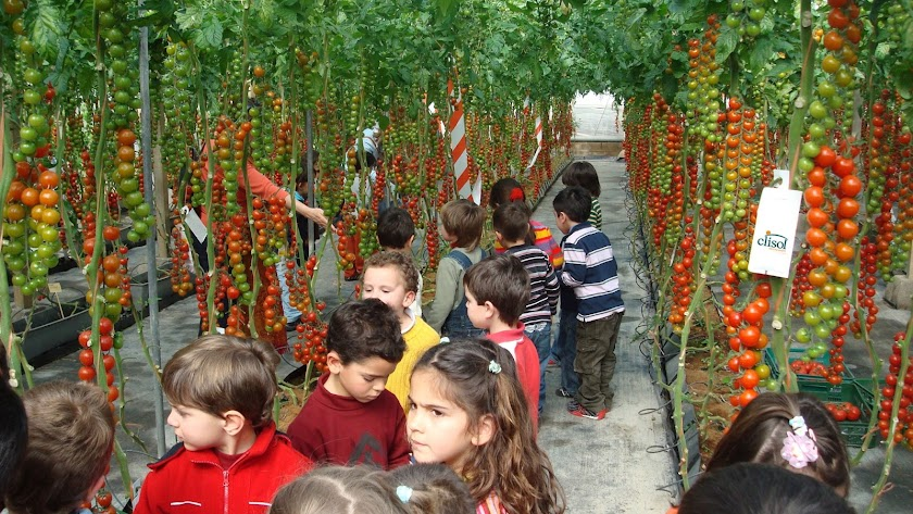 Excursión escolar a un invernadero con Clisol.