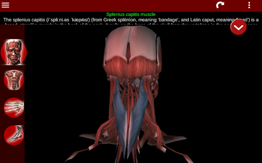 Muscular System 3D (anatomy) 2.0.8 Screenshots 14