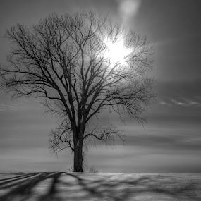 by Francois Larocque - Black & White Landscapes ( winter, tree, snow, star, dead, light, sun )