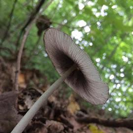 Gill View by Virginia Howerton - Nature Up Close Mushrooms & Fungi
