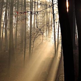 Sun rays by Jana Černošková - Landscapes Forests ( sun rays,  )