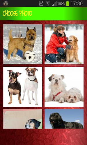 Puzzle Games Dog zoo Images APK | APKPure ai