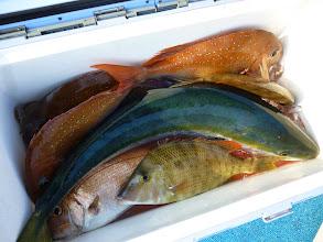 Photo: オガワさんの釣果!ブリ折れ曲がってますけど・・・