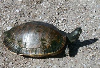 Photo: Turtle in Camping Resort in Huntsville, TX
