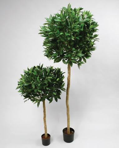 Laurel Tree (Lagerträd) - 110cm - 170cm