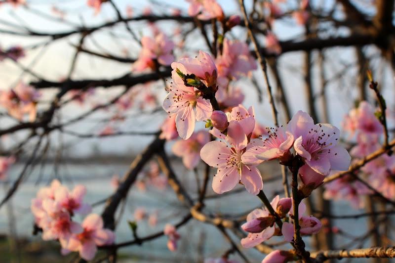 E' Primavera di abi313