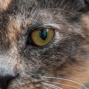 Kitten by Brad Kalpin - Animals - Cats Portraits ( kitten, cat, pet, kitty, animal )