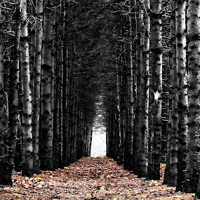 Tunnel d`arbres by Clermont Poliquin - Landscapes Forests ( pwcautumn_dq )