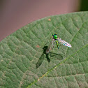 Green long legged Fly