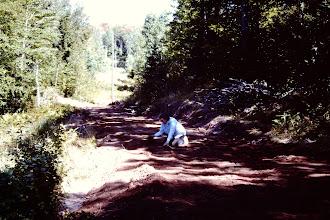 Photo: Lorraine picking rocks