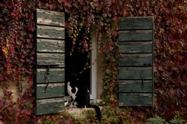 L'autunno è alle... finestre! di elenaraja