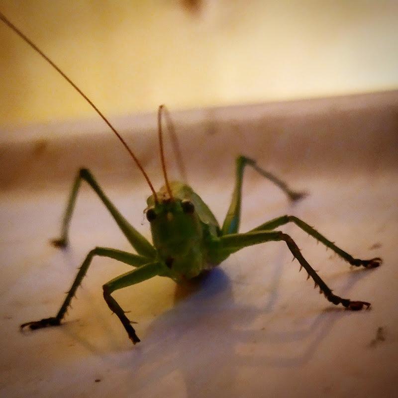 Grasshopper di fotolife_____
