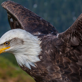 To Fly (Raw Edit) by Nico Carbajales - Animals Birds