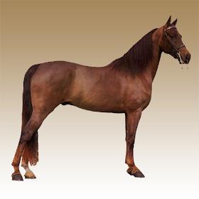 Звуки лошади