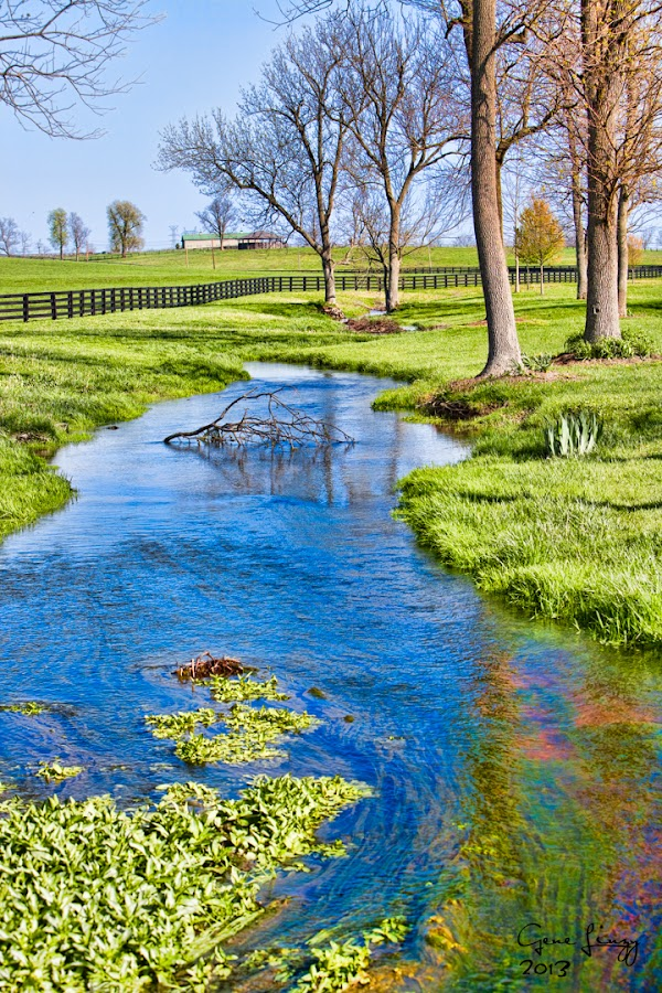 Kentucky Horse Farm by Eugene Linzy - Landscapes Prairies, Meadows & Fields ( fence, creek, trees, spring, kentucky,  )