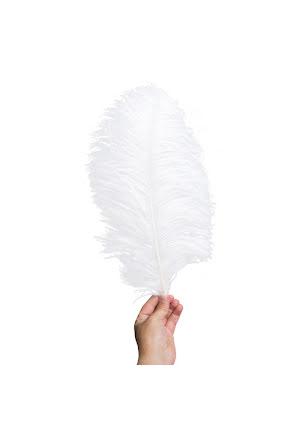 Plym, stor vit
