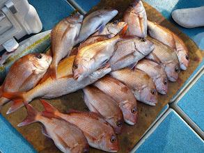 Photo: 釣果です。 イマムラさんの真鯛。これとシメた真鯛合わせて24匹でした!
