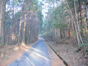 寺洞林道を進む