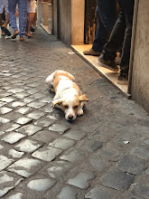 Photo: Dog gone tired of shopping