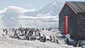 Penguin Post Office thumbnail