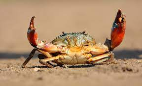 Scientists create energy from crab shells using triboelectric nanogenerators