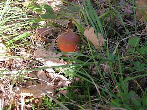 Photo: C9269085 Slemien - grzyby w ogrodzonym osrodku Madahora
