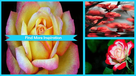 Macro Rose Wallpaper - náhled