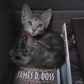 Cat in the Box by Norma Moore - Animals - Cats Kittens ( books, kitten, box )