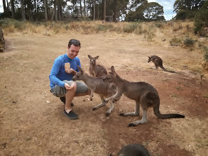 Photo: The kangaroos were all laying on their side, propped up on one elbow, generally looking as chill and nonchalant as possible.  Until I walked up with some food.
