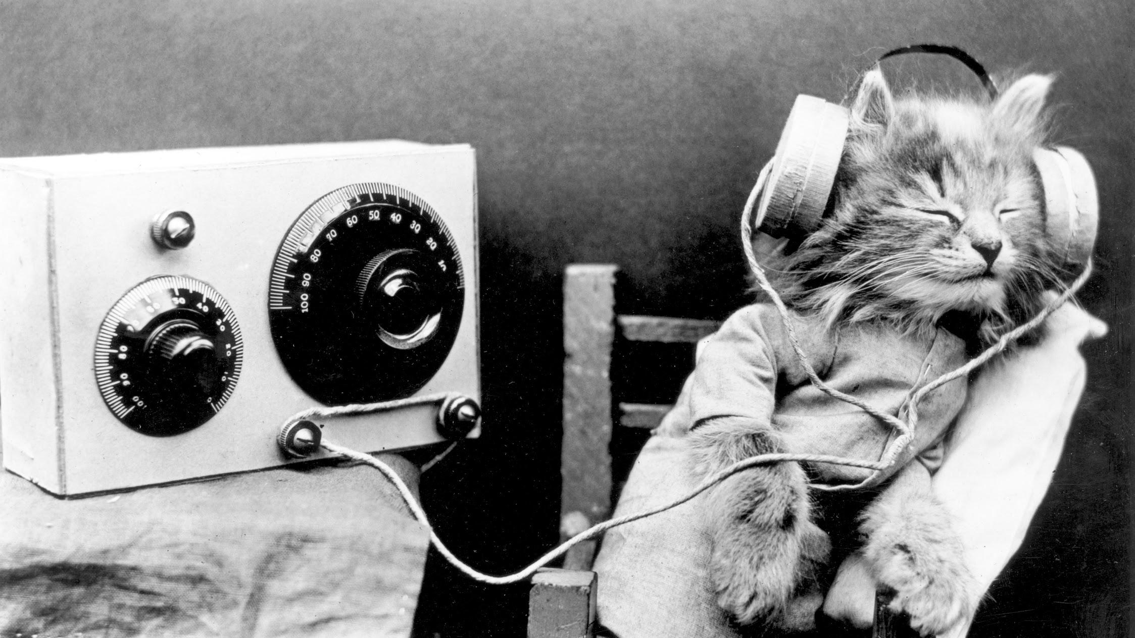 Radiokot