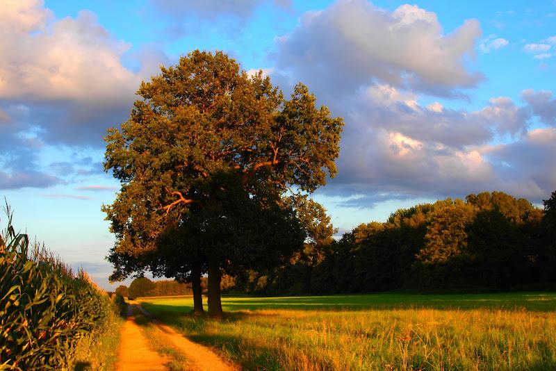 Photo: Wiesen und Bäume an einem sonnigen Sommerabend