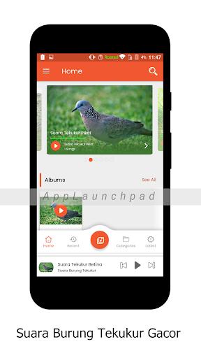 Download Suara Tekukur Betina : download, suara, tekukur, betina, Download, Suara, Burung, Tekukur, Android, STEPrimo.com