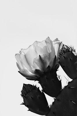 Fiore e  spine di funakoschi