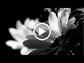Video: Antonio Vivaldi  L'odio vinto dalla costanza (RV Anh. 51) - Aria [Eumena] Perché lacerò il foglio -