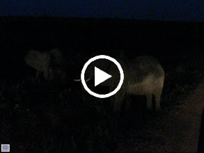 Video: Aftermath of an elephant fight