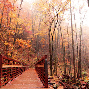 The Autumn Aura by Avishek Bhattacharya - Buildings & Architecture Bridges & Suspended Structures (  )