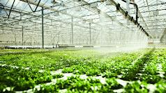 La UE autoriza a España a destinar ayudas públicas a modernizar invernaderos