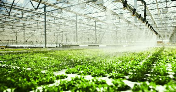 Los invernaderos almerienses tienen un valor de 12.000 millones de euros