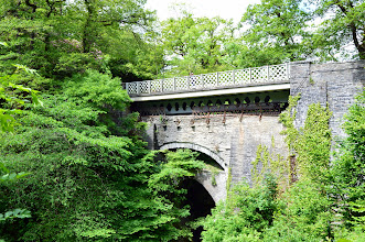 Photo: tree bridge