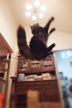Photo: 跳んでます