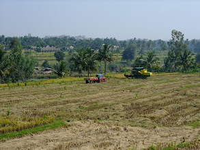 Photo: Harvesting rice.
