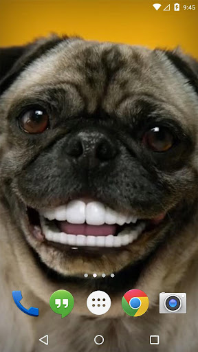 Grin Dogs Smile Live Wallpaper