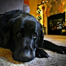 by DE Grabenstein - Animals - Dogs Portraits