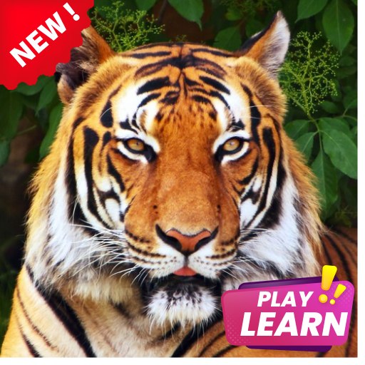 Learn Animals Names in English Pictures Words Quiz