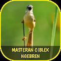 Master Ciblek Ngebren Gacor Offline icon